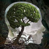 Проблемы формирования ментального тела.Ментальное тело. Тонкие тела человека. Процесс формирования ментального тела. Ментальное здоровье. Проблемы в ментале.