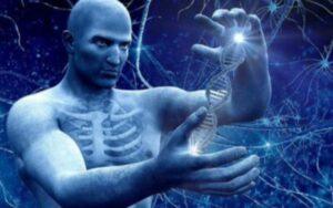 Генетическое развитие человека. Генетическая модификация и эволюция человека. Этапы эволюции.