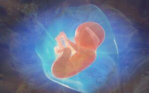 Коррекция внутриутробного развития, внутриутробное развитие